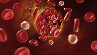 cholesterol mýty a fakta