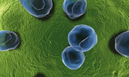 Plicní chlamydie příznaky