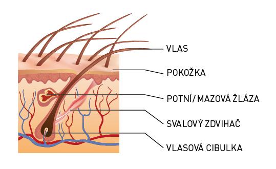 Kožní poruchy