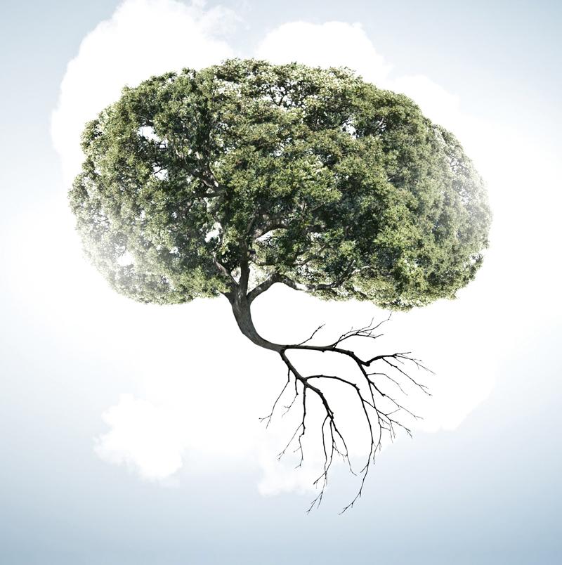 jake palivo potrebuje nas mozek